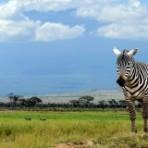 Национальные парки Кении